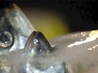 Sardines | hoogglans laminaatprint geplakt op aluminium | 100 x 76 cm | 8 stuks
